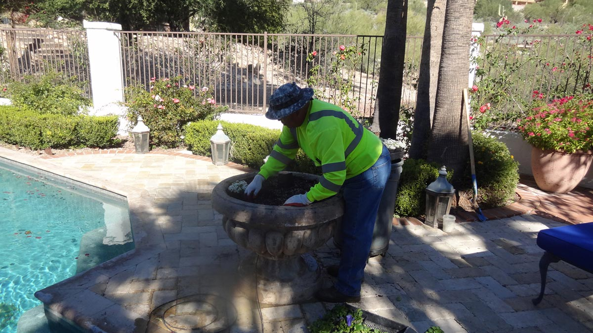 Planting Fall Flowers in Tucson